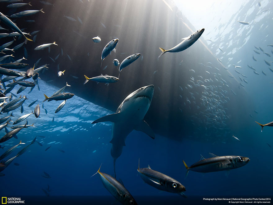 National Geographic (4)