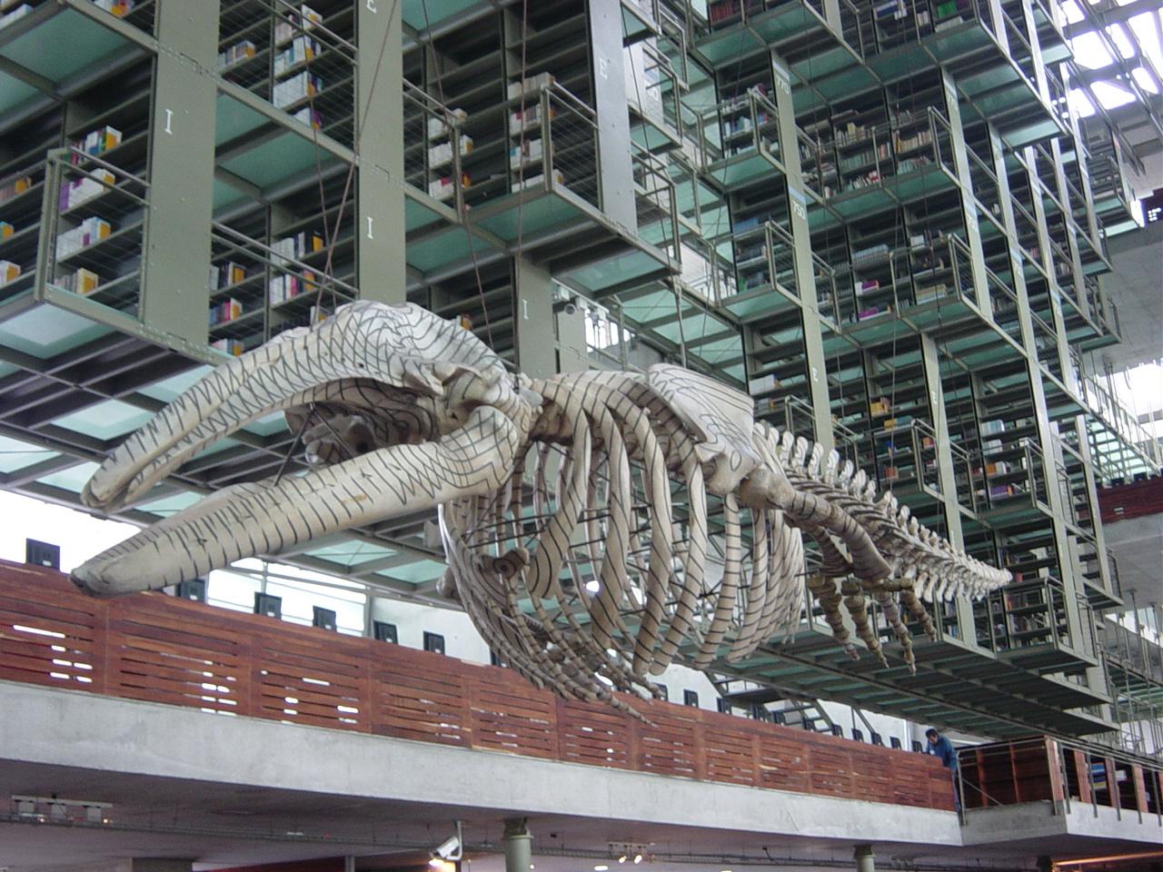 Bibliotecas (2)