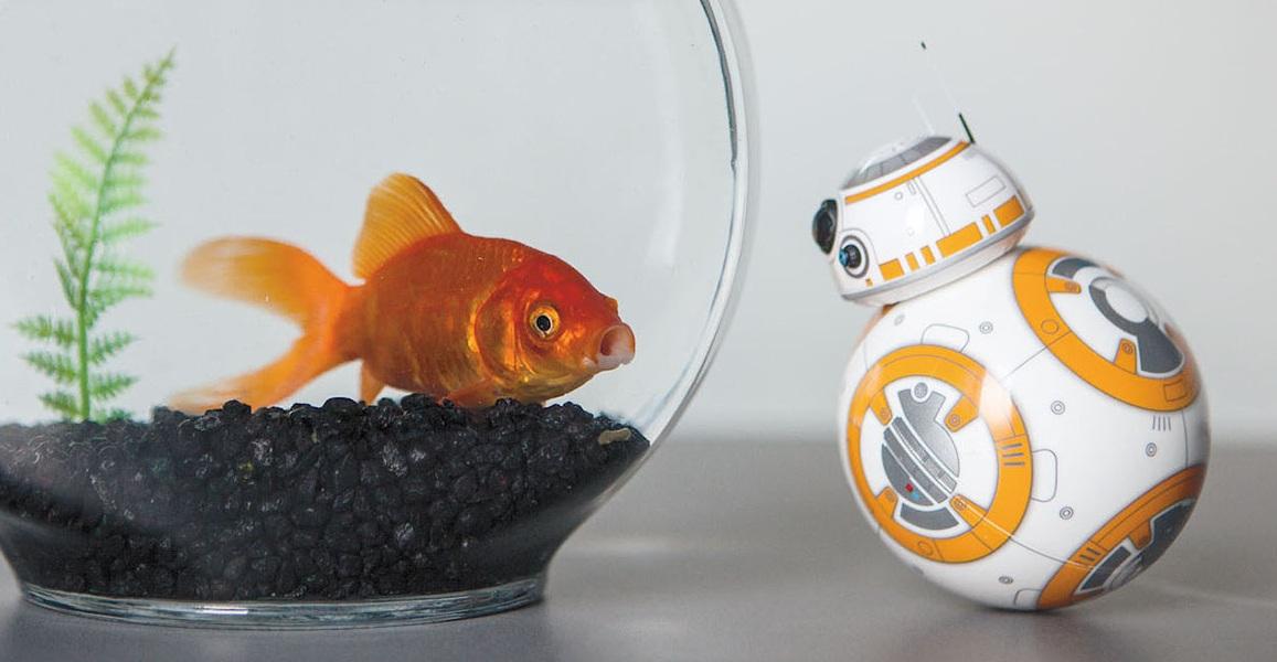 BB8 fish