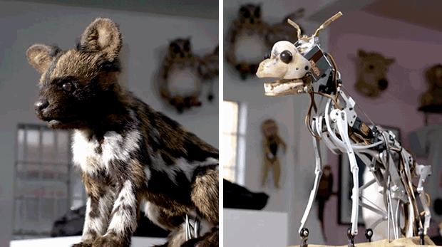 animales_robot_comparar