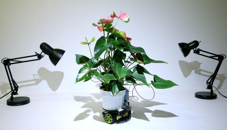 PlantRobot1