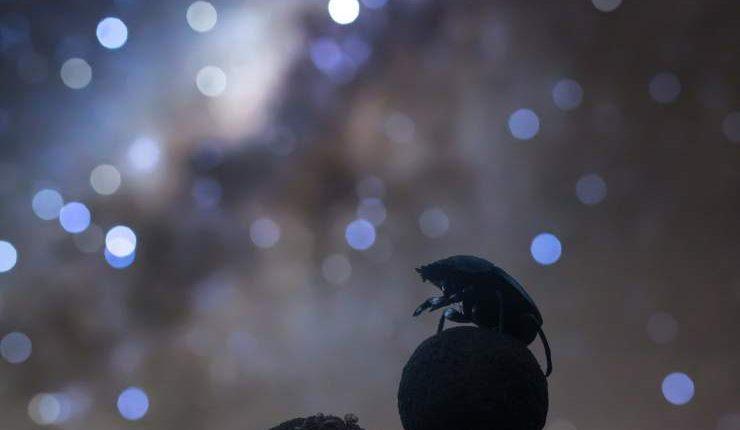 hipertextual-estas-son-imagenes-que-se-juegan-premio-mejor-astrofotografo-ano-2019394323-740×1110