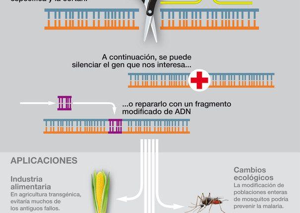 Asi-funciona-CRISPR-la-revolucionaria-herramienta-de-edicion-de-ADN_image990_