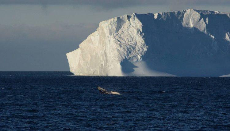 un-nuevo-iceberg-se-desprende-de-la-antartida-es-tan-grande-como-gran-canaria