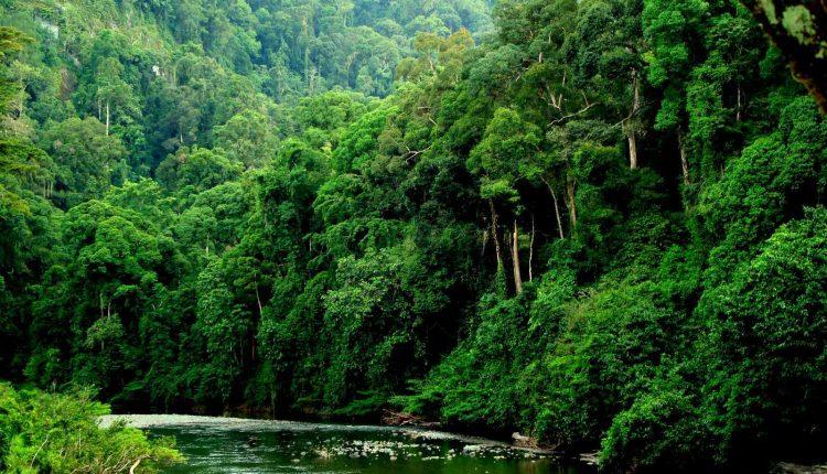 danum-valley-bosque-lluvioso-tropical