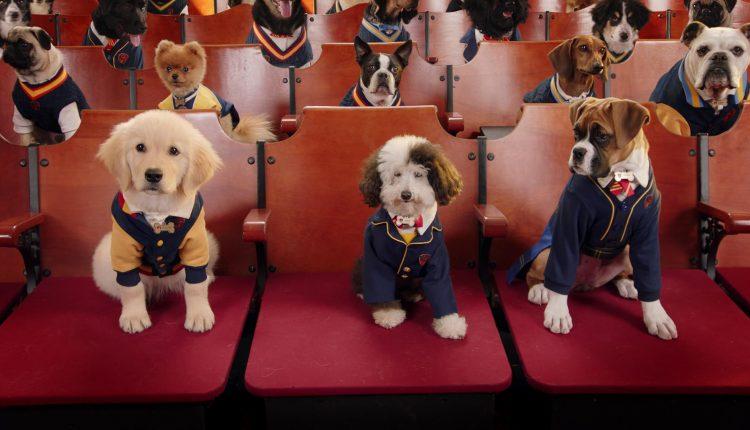 Academia de cachorros – Temporada 2