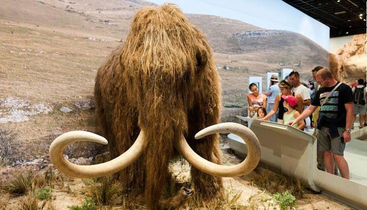 mamut-lanudo-replica